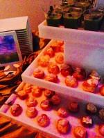 Creative Hands Cuisine Catering In Phoenix At The AURA Fundraiser (7)